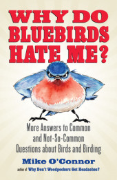 Why Do Bluebirds Hate Me? Cover