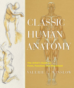 Classic Human Anatomy