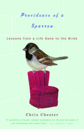 Providence of a Sparrow Cover