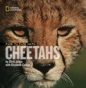 Face to Face With Cheetahs Cover