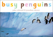 Busy Penguins Cover