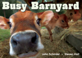 Busy Barnyard Cover