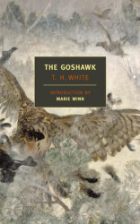 The Goshawk